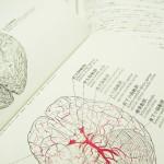 脳には妙なクセがある